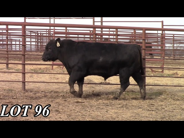 Mead Angus Farms Lot 96