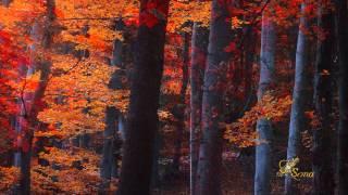 Андрей Петров - Мелодия из фильма Осенний марафон (Фотографии Илдико Нир)