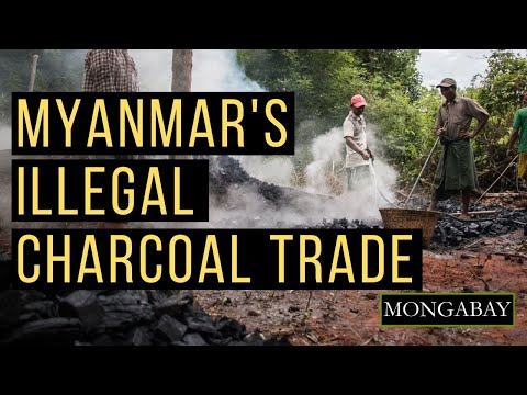 Myanmar's Illegal Charcoal Trade
