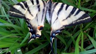 Rare butterflies. Редкая бабочка в россии. редкие бабочки
