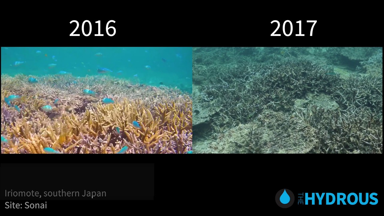 A Coral Reef Before And After Bleaching