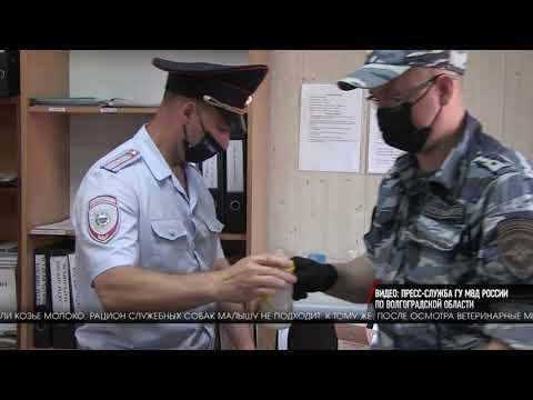 Истощенного львенка обнаружили волгоградские полицейские в автобусе «Махачкала-Москва»