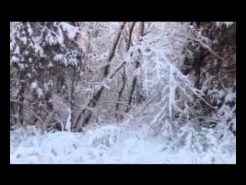 Охота и рыбалка: Охота на лося