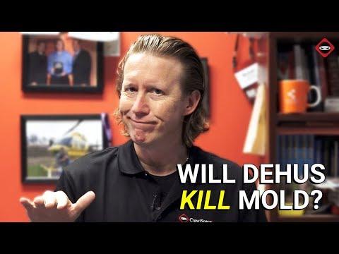 Will A Dehumidifier Kill Mold?   How To Kill Mold In Crawl Space   Mold Remediation
