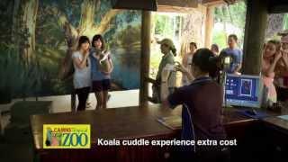 Cairns Tropical Zoo TVC - Kangaroos & Koalas