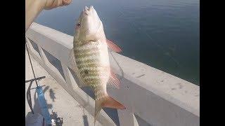 Bridge Fishing in The Florida Keys, Lobster, Snapper and Shark