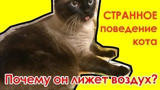 Странное поведение кота. Кот лижет воздух!