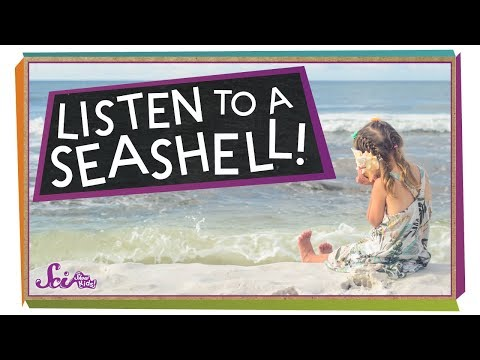 what-do-you-hear-in-a-seashell?