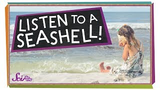 What Do You Hear in a Seashell?