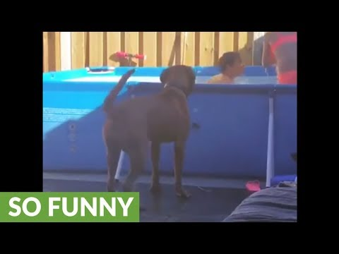 Dog not allowed in water, makes most of pool time