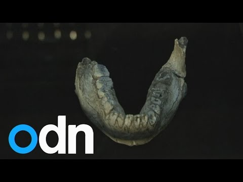 New species of early human discovered