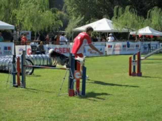 aragorn e merovingio gran premio d'autunno di agility dog www petrademone it