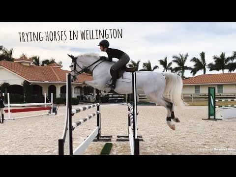 trying horses in wellington, florida | january 2018 | buying my new horse!