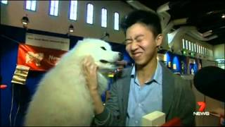 NSW Samoyed Club at Sydney Dog Lovers Show