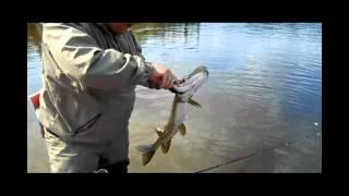 Рыбалка в Тыве -- июль 2012