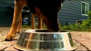 Local veterinarian discusses report about ice in your dog's water