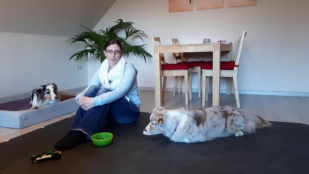 Hundetraining Hundebox positiv trainieren   So geht dein Hund ...