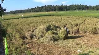 Phillip And Beth Getting Rice Hay For Compost
