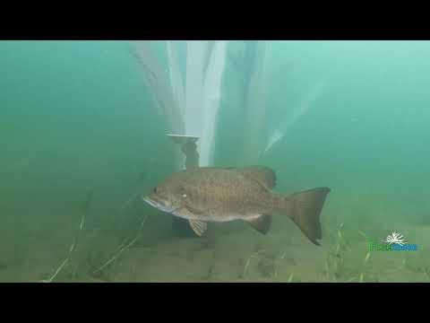 The Science Behind Fishiding Artificial Fish Habitat-Underwater Video (Part 5 Of 10)