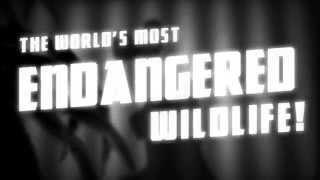 The Case of the Cursed Dodo Full Trailer