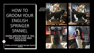 HOW TO GROOM YOUR ENGLISH SPRINGER SPANIEL: SHOW GROOM PART 3: TAIL, FEET, BACK COAT AND UNDERLINE