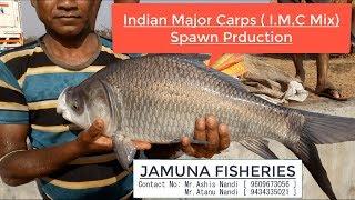 Mini(Portable) Fish Farming Plant At Musabani , Jharkhand - Jamuna