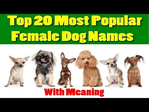 Top 20 Most Popular Female Dog Names with Meaning 2018