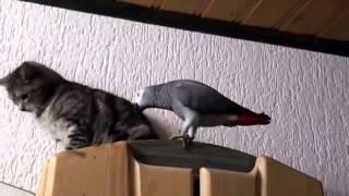 Попугаи-приколисты=)