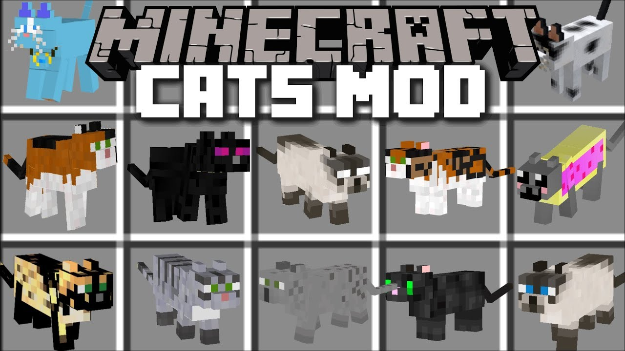 Minecraft Cat Mod Breed And Spawn Ugly Looking Cats Minecraft Youtube