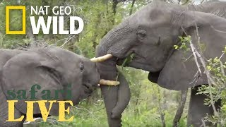 Safari Live - Day 66 | Nat Geo WILD thumbnail