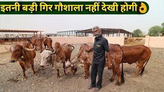 गुजरात में गिर गाय की बड़ी गौशाला|Aryaman Gir Gaushala Jasdan Gujrat