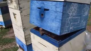 Как сохранить откачанные рамки  до холодов от восковой моли.  10.08.2918 г.