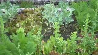 Green Smoothie Made With Edible Wild Plants + A Garden Tour (video 1 Of 2)