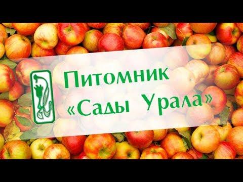каталог сайтов новых в санкт-петербурге знакомства