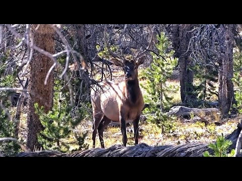 2018 Idaho Archery Elk Hunt