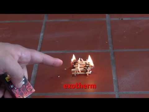 Endotherme und exotherme