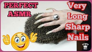 NEW SENSATIONAL ASMR VIDEO! INCREDIBLE LONG SHARP  NAILS PLAY WITH HEDGEHOG! SUPREME Effects!