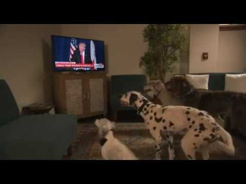 Donald Trump Trains Dogs To Sit! SO CUTE!