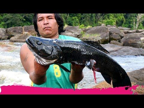 Fishing RIVER MONSTERS In Suriname + Jungle Trek | Palumeu, Suriname