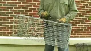 Armadillo Traps