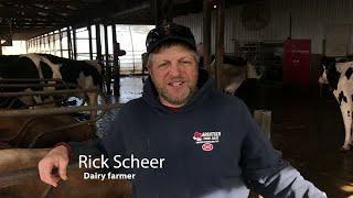 Robots milking cows