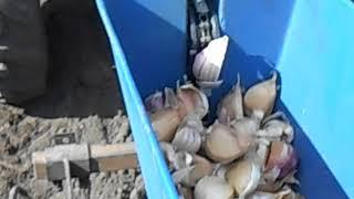 видео Чеснокосажалки для минитракторов