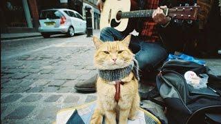 Уличный кот по имени Боб | Мир глазами кота Боба