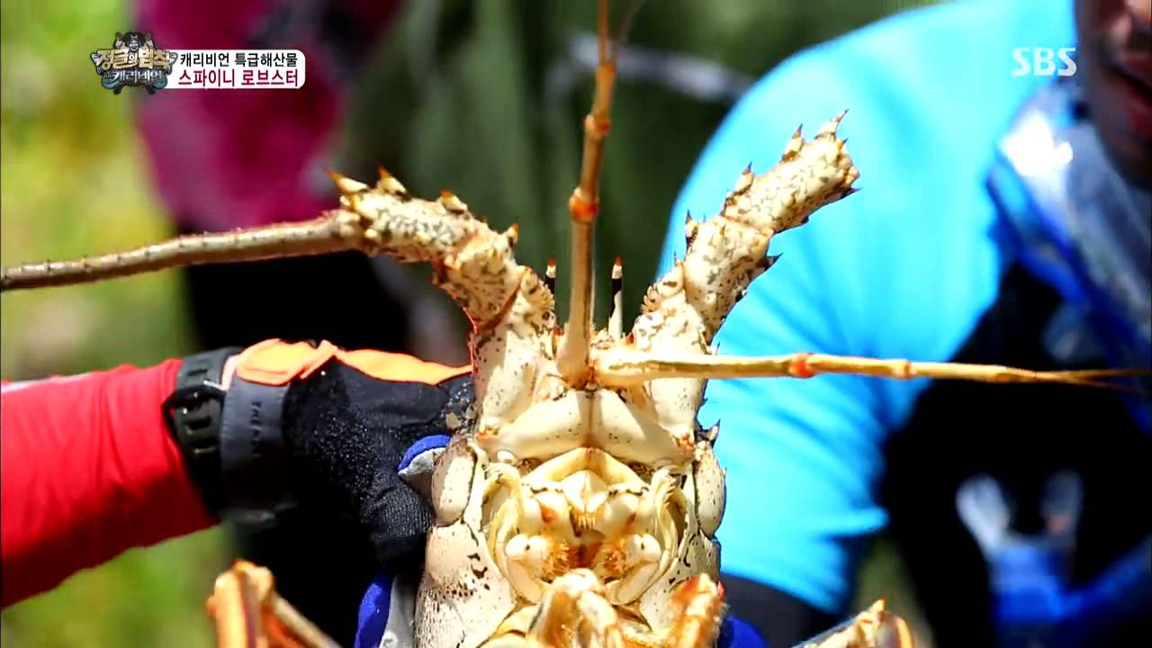 The law of the Jungle(정글의법칙) Ep 74 #33(3)