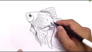 cara menggambar ikan mas / how to draw gold fish