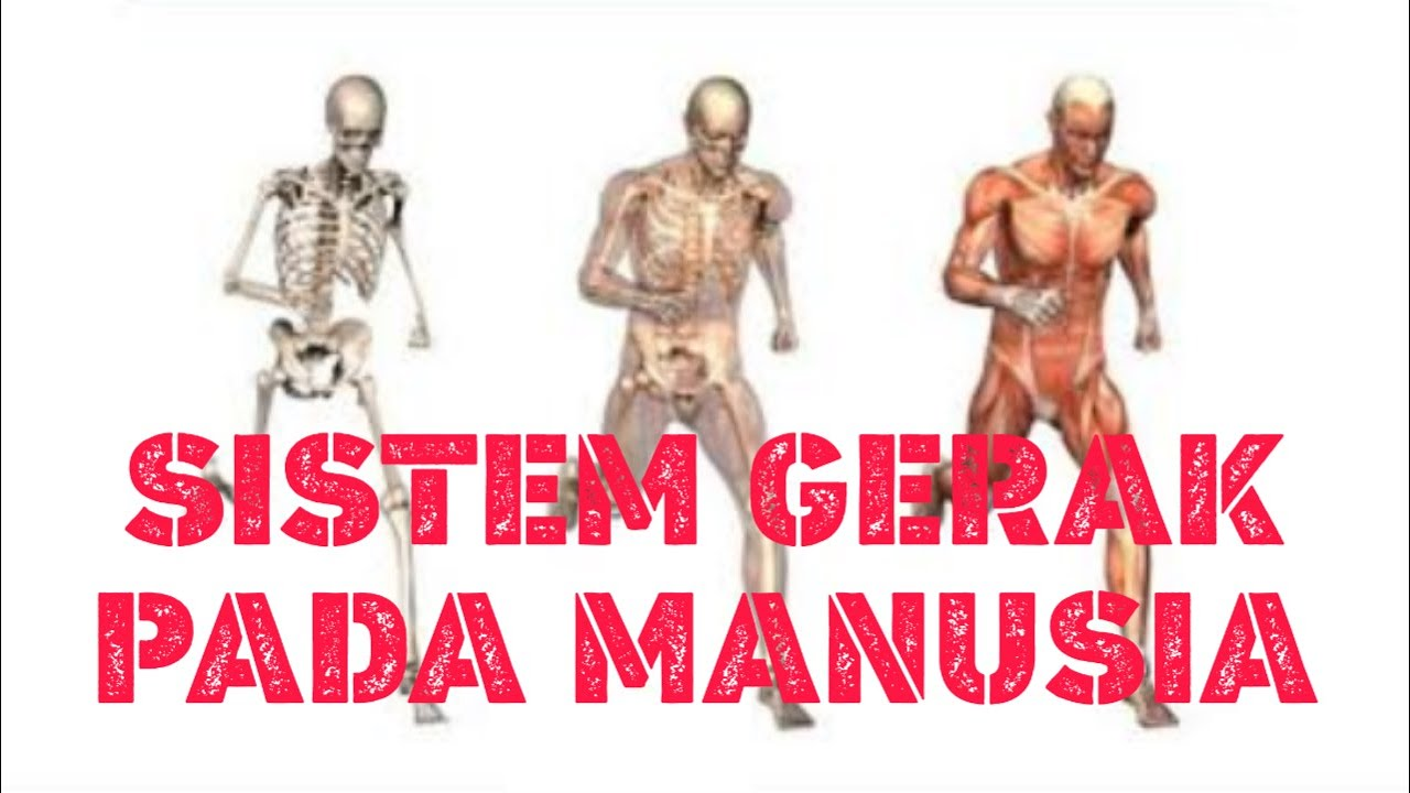 SISTEM GERAK PADA MANUSIA - YouTube
