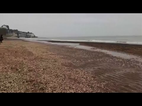 Dead Marine Life Washes Up on UK Beaches