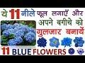 ये ११ नीले फूल लगायें और अपने बगीचे को गुलजार बनायें || Beautiful Blue Flowers for Garden