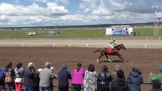 Алтаргана-2018. Скачка лошадей 3х лет и старше. 2400м.