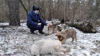 Как едят щенки кормлю щенков Зимняя рыбалка пикник на лесном озере животные